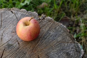 Organic Apple on Splitting Block
