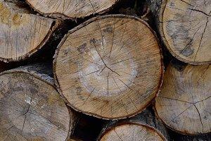 Seasoned Sugar Maple Firewood