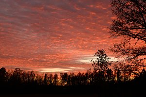 Dramatic Sunset and Tree Silhouettes