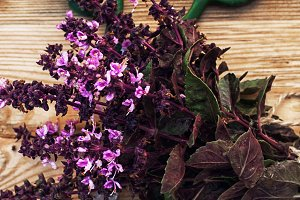 bunch of fresh blooming fragrant lav