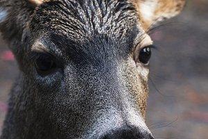 Deer Close Up