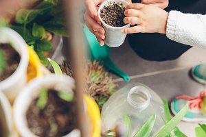 Woman hands showing seedling plants