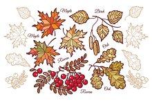 Autumn leaves. Set.