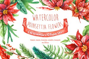 Watercolor Poinsettia Flowers