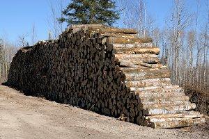Aspen Piled on Log Landing in Fall
