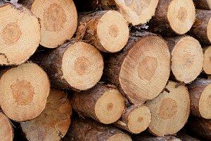 Detail of Norway Pine Pulp Logs