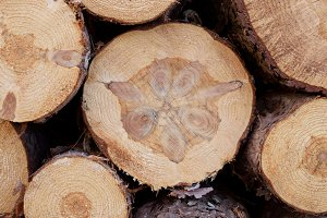 Closeup of Norway Pine Bolts