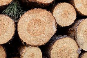 Freshly Cut Red Pine