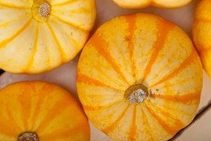 baby pumpkins 004.jpg