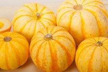 baby pumpkins 007.jpg