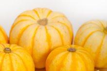 baby pumpkins 030.jpg