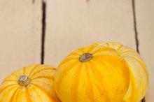 baby pumpkins 040.jpg