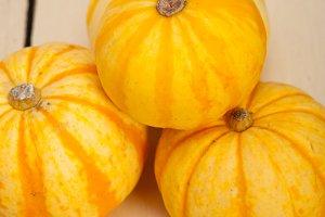 baby pumpkins 038.jpg