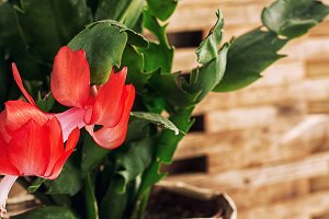 flowering ornamental plants