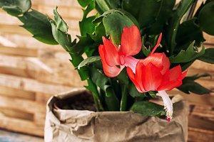 flowering ornamental plants