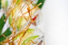 japanese sushi 115.jpg