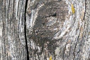 Grunge Timber Knot