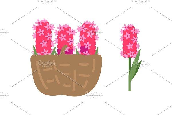Pink Flowers in Basket, Blooming