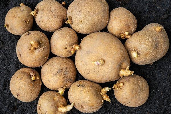 Global Seed Potatoes Market 2020 Key Performance, Top Players ...
