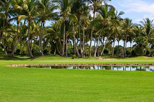 green field, pound with palm trees