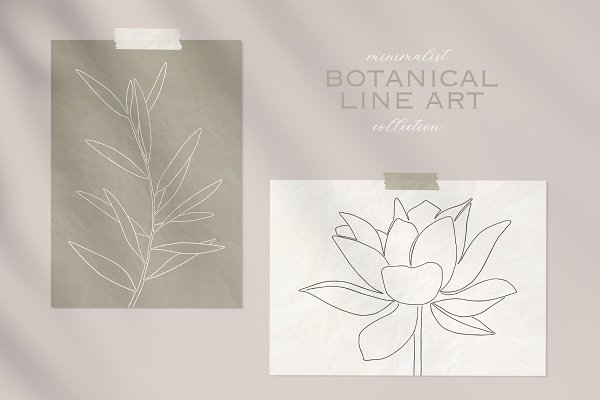 Botanical line art collection