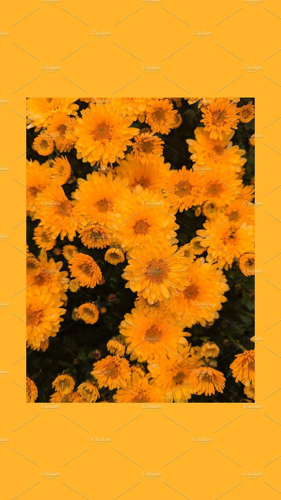 Fashion Aesthetic Wallpaper Phone High Quality Beauty Fashion