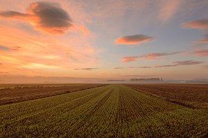 Misty sunrise in the fields