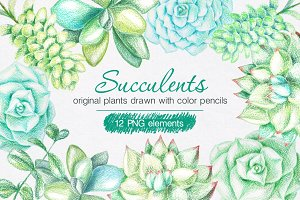Succulents Drawn by Color Pencils