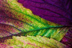 Texture of colored leaves