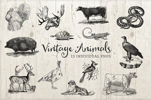 13 Vintage Animal Illustration PNG