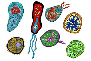Colorful amebas, amoebas, microbes a