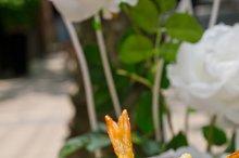 japanese shrimps tempura and salad 014.jpg