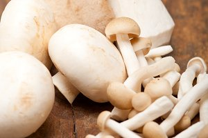 mushrooms 009.jpg