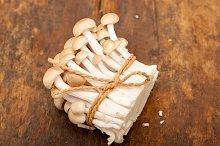 mushrooms 022.jpg