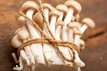 mushrooms 024.jpg