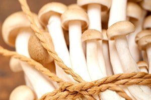 mushrooms 025.jpg