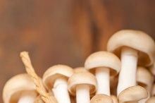 mushrooms 026.jpg