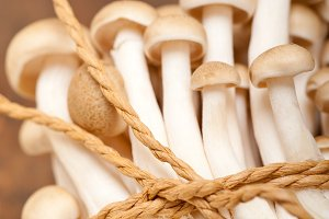 mushrooms 026.jpg