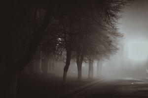 Horror scene of a autumn fog.