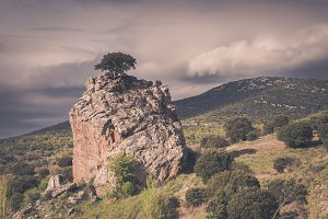 A tree on a top of a big rock