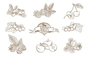25 Outline hand drawn fruit set