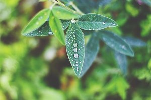 green leaves and drops