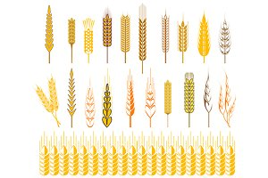 Ears of wheat and cereals symbols