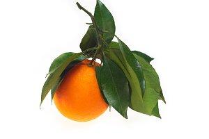 fresh orange 01.jpg