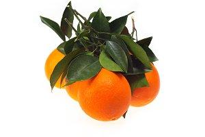 fresh orange 02.jpg