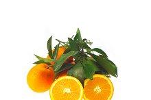 fresh orange 04.jpg