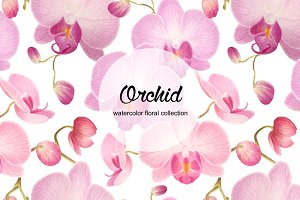 Set of watercolor orchid