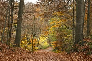 autumnal path