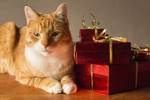 Cat with presents