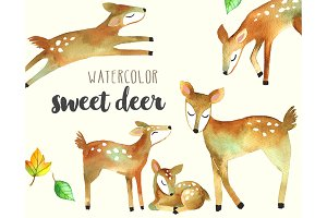 Sweet Deer Watercolor Set